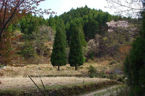 20110505_077