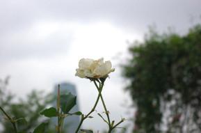 20126_135