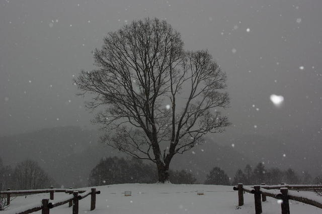 2009・冬