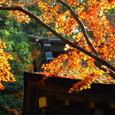 秋・上賀茂神社