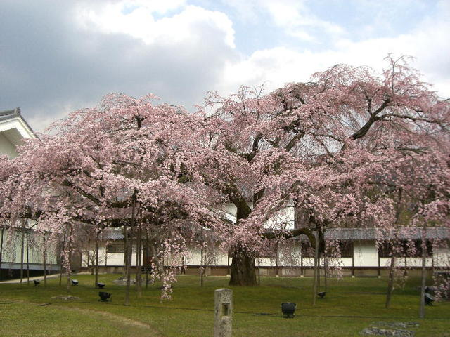 春・醍醐寺
