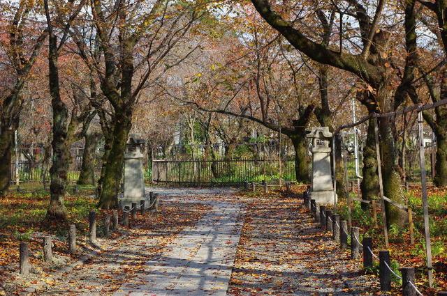 冬・平野神社