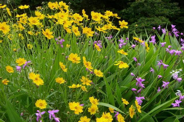 夏・初夏の花