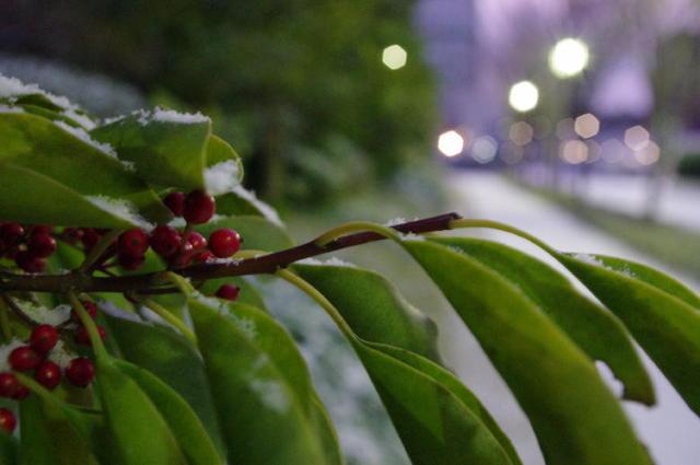 冬・京都市内