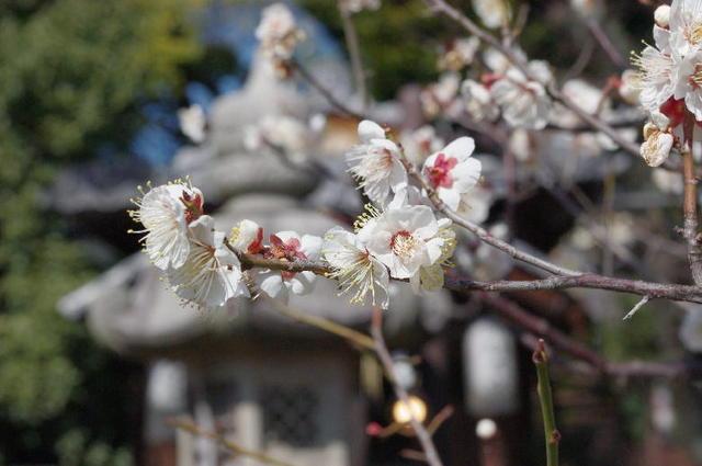 冬・春日神社