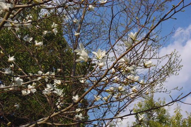 春・京都市内