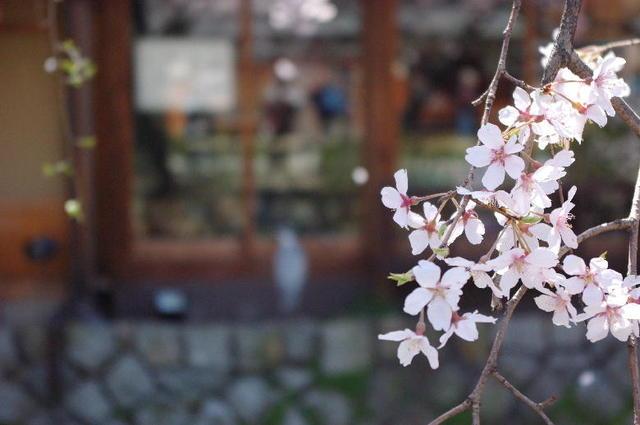 春・祇園白川